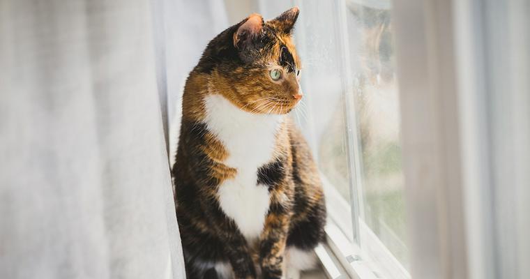 猫が「カカカ」と歯を鳴らすクラッキングとは? 理由などを解説