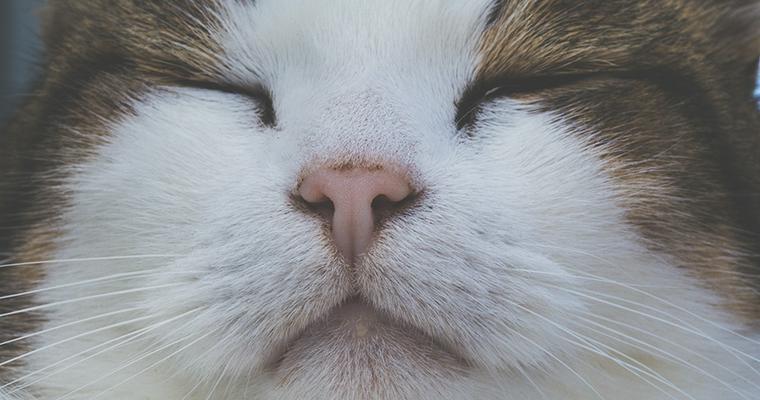 猫が鼻キスをするのはなぜ? 飼い主からのキスを嫌がる理由も解説