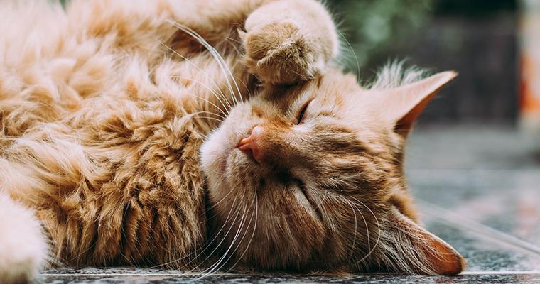 猫は腰トントンが好き? オスの反応や注意点などを解説