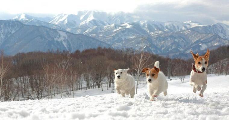 犬が大好きな雪遊び! 注意点のほか、雪から足を守る犬用靴やおしゃれで機能的な服をご紹介