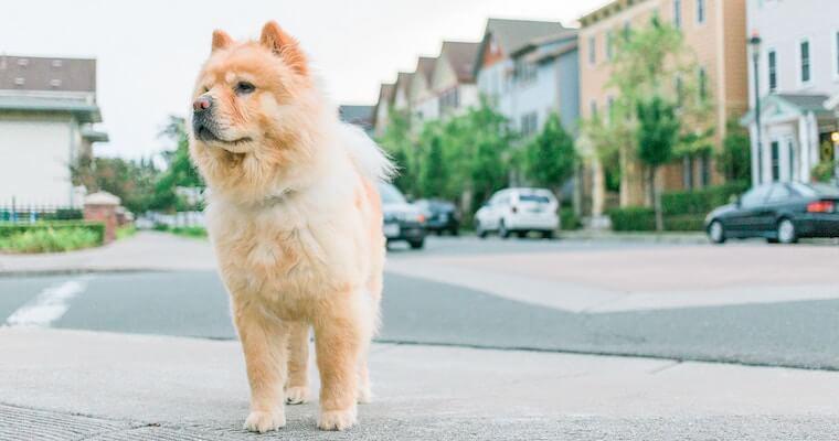 犬のアナフィラキシーとは? 症状や原因、治療法を獣医師が解説