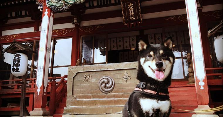 ペット連れ参拝で人気の神社・お寺を紹介 初詣もマナーを守って愛犬・愛猫と