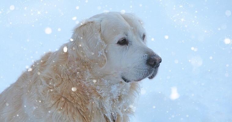 冬でも愛犬の散歩は必要? 散歩が必要な理由と防寒対策