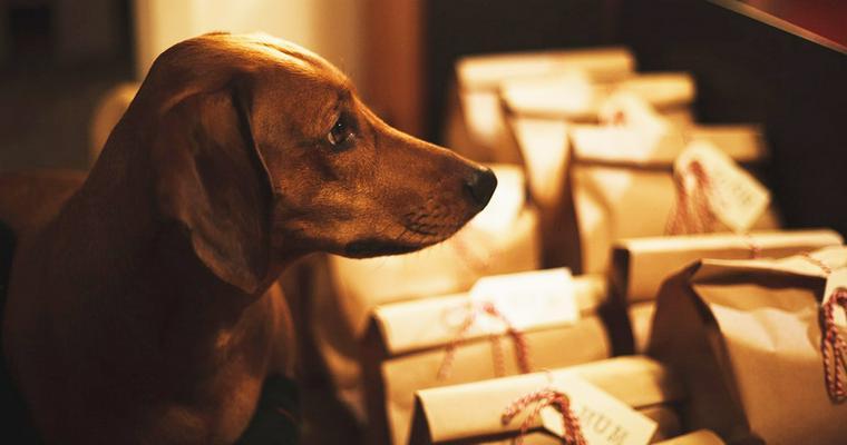 犬の誕生日をどう祝う? ペットが喜ぶケーキやプレゼント、注意点を紹介