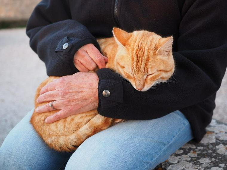 膝 の で 寝る 上 猫