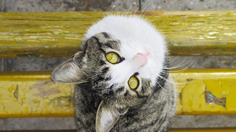 野良猫の保護をするには? 保護の仕方や注意点を解説