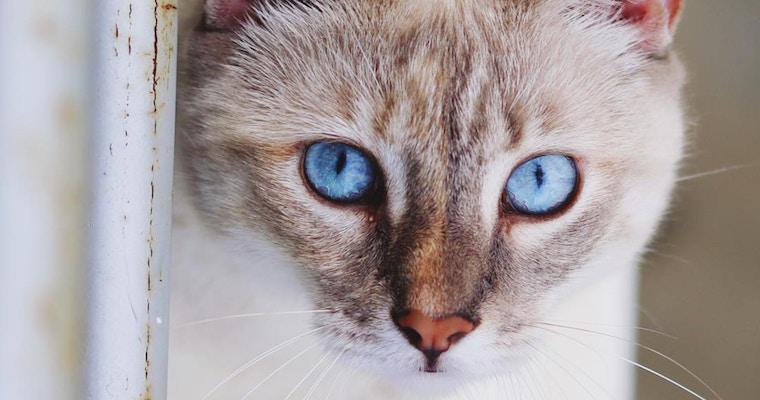 猫の鼻が乾燥しているけど大丈夫? 考えられる原因と病気