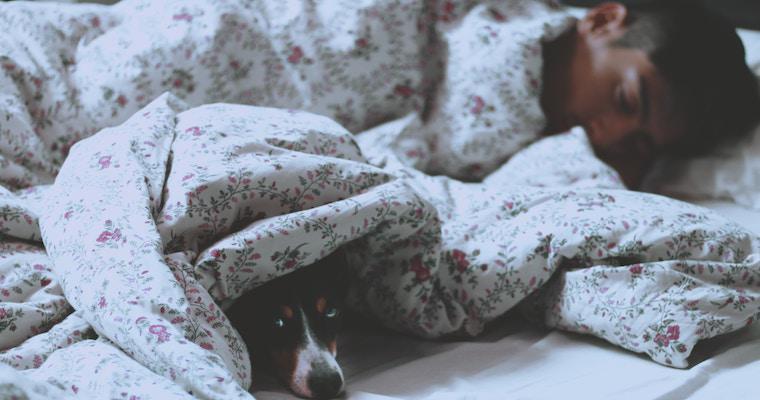 犬の夢は何の暗示? 大きい・茶色・黒い犬の意味など夢占いで徹底解説