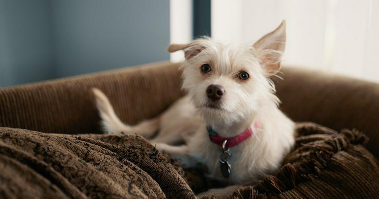 犬もこたつが大好き! 安全に使うための注意点やおすすめの犬用こたつを紹介