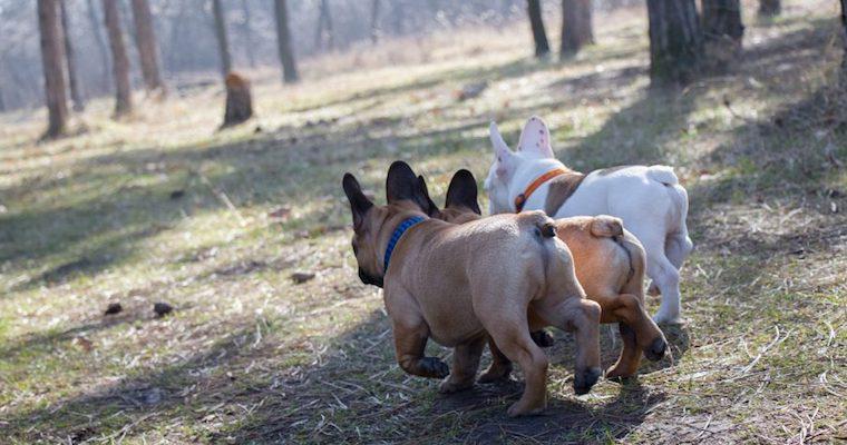 犬が後ろ足で蹴る意味とは? 理由や注意点などを解説