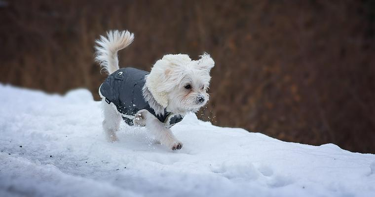 バイヤーおすすめ犬の冬服 暖かいダウンやおしゃれなつなぎなど