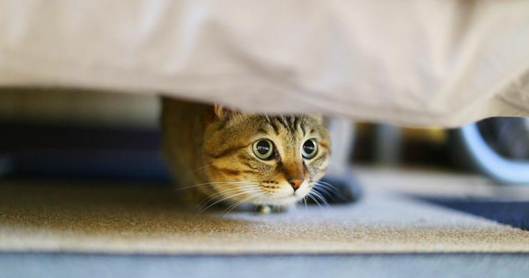 猫はドライヤーが嫌い! 上手く乾かすコツや布団乾燥機を使った乾かし方まで紹介