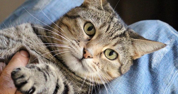 猫が撫でられて喜ぶ場所はどこ? 愛猫のうれしいサインをチェック