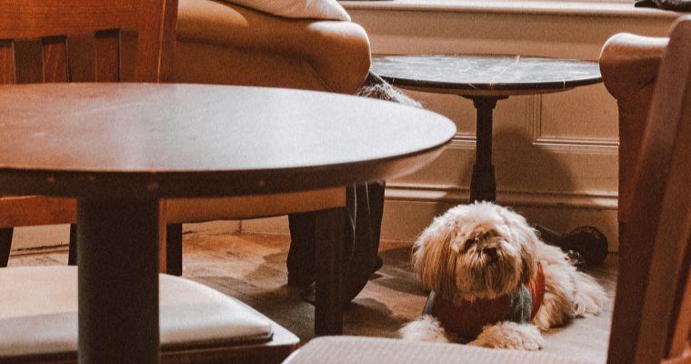 横浜のドッグカフェ13選 室内、ドッグラン付きなどおすすめのカフェを紹介