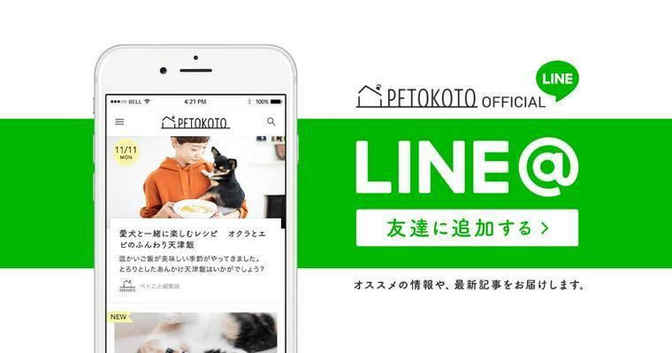 【お知らせ】LINE@が始まりました! 愛犬・愛猫との暮らしが楽しくなる読みものをお届けします♪