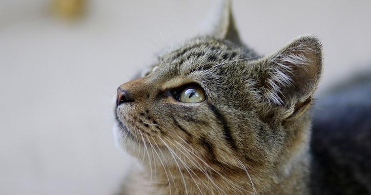 猫はアルミホイルが好き? 気をつけたいボール遊びや誤飲