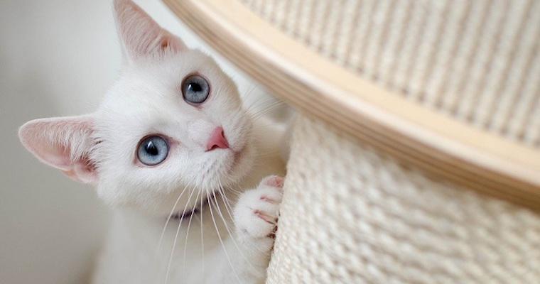 猫のオスとメスはどう違う? 特徴と見分け方