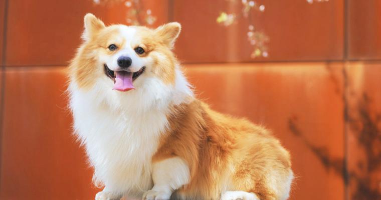 【愛犬の被毛ケア Vol.1】犬の被毛がどんな構造か知っていますか? 被毛研究のプロが解説