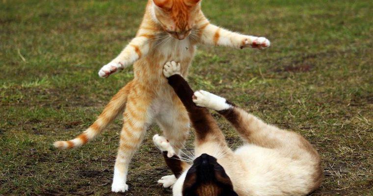 猫がキックしてくる意味とは? おもちゃでストレス解消も