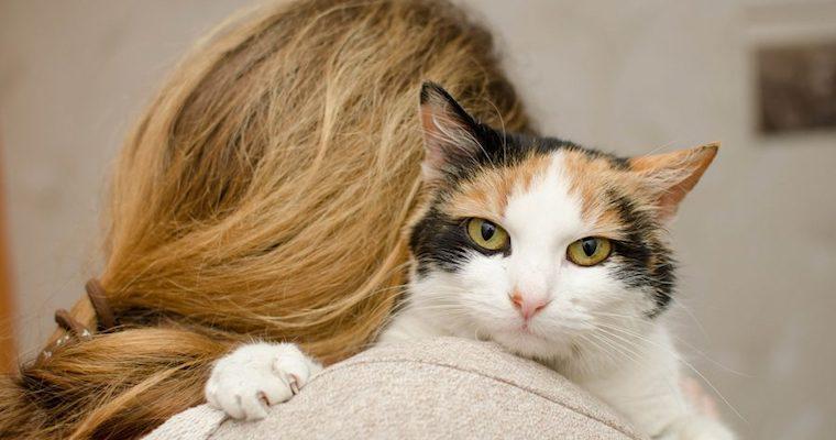 猫が髪の毛を噛んだり舐めたりするのはなんで? 理由や気をつけたい誤飲などを解説