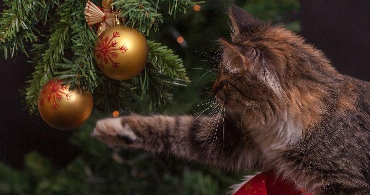愛猫とのクリスマスはツリーに注意!? おすすめの猫用ケーキやプレゼントも【2018年版】
