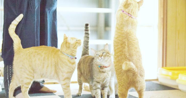 猫のかぎしっぽは遺伝によるもの? 理由や種類を紹介