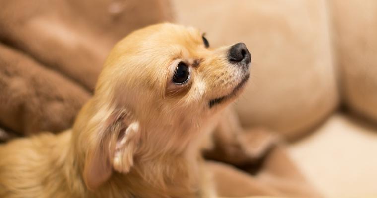 犬をマンションで飼うときの注意点。トラブル対策やおすすめの犬種を紹介