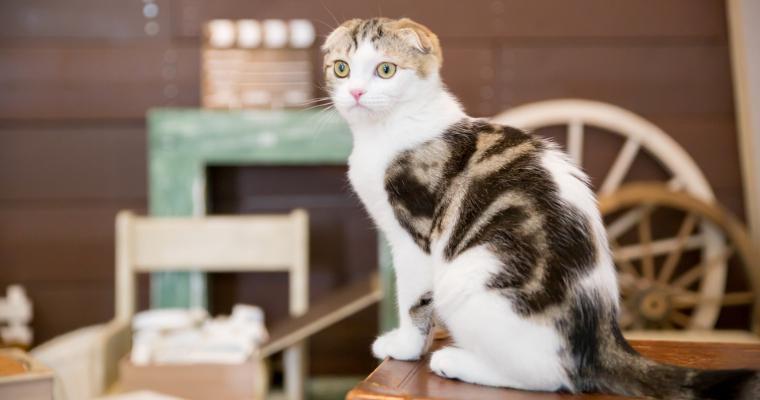 猫をマンションで飼うときの注意点は? ベランダからの脱走や爪とぎ対策を紹介