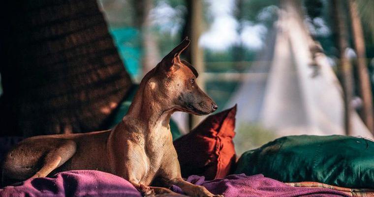 犬とキャンプの魅力とは? 楽しみ方と注意点をドッグトレーナーが解説