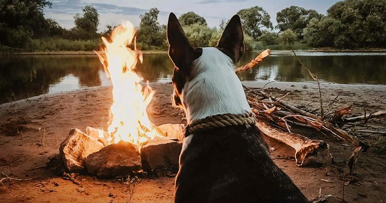 犬とキャンプに行く前に|事前準備はしつけやケガの予測も必要 Vol.2【愛犬とアウトドア】