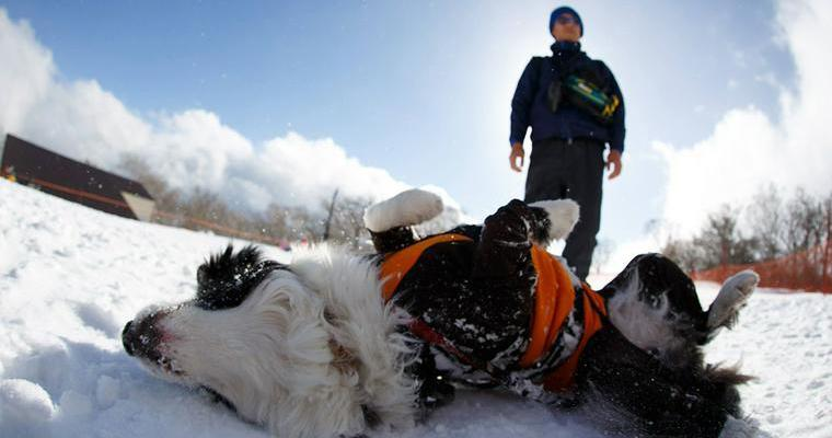 愛犬と冬のアクティビティー! 雪山で楽しむウィンタースポーツ「スノーシューツアー」