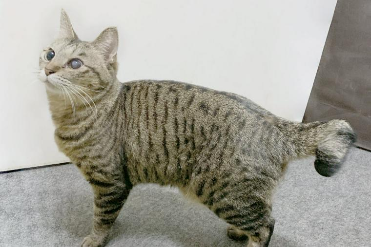 猫 尻尾 種類