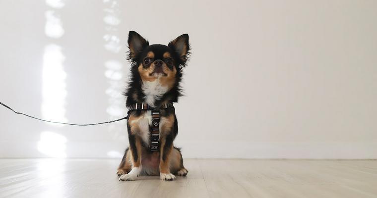 バイヤーおすすめ犬用ハーネス 抜けにくいものから革素材のおしゃれなものまで