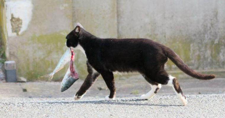 猫は魚の骨を食べても大丈夫? 飲み込んだ場合の危険性や対処法