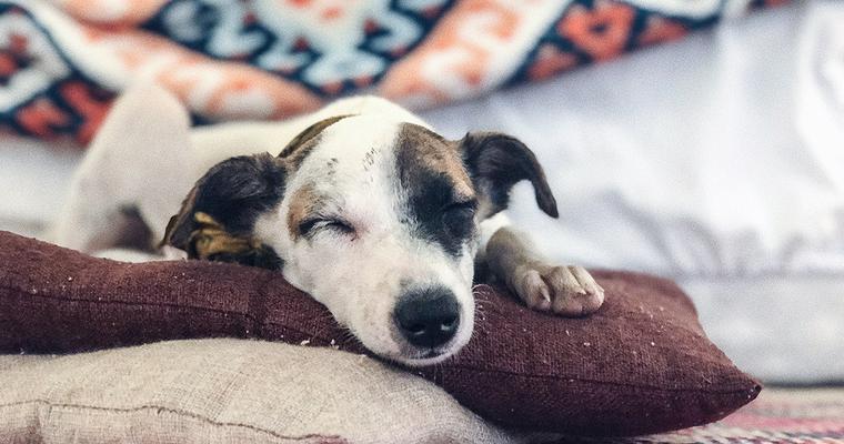 バイヤーおすすめ犬の湯たんぽ 温度、低温やけどに注意して手軽に寒さ対策を
