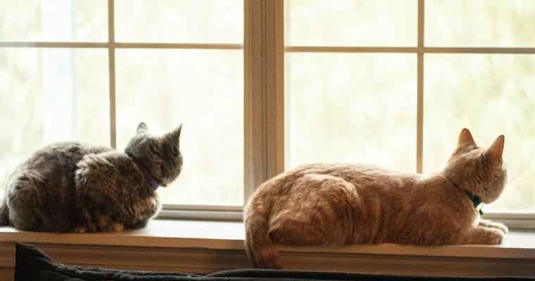 【2020年版】猫の日イベントまとめ 編集部オススメ限定グッズも紹介します。