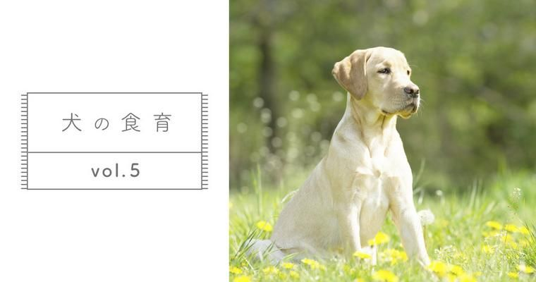 【獣医師監修】ドッグフードを変えてうんちが増えた・減った理由を解説します。【犬の食育 Vol.5】