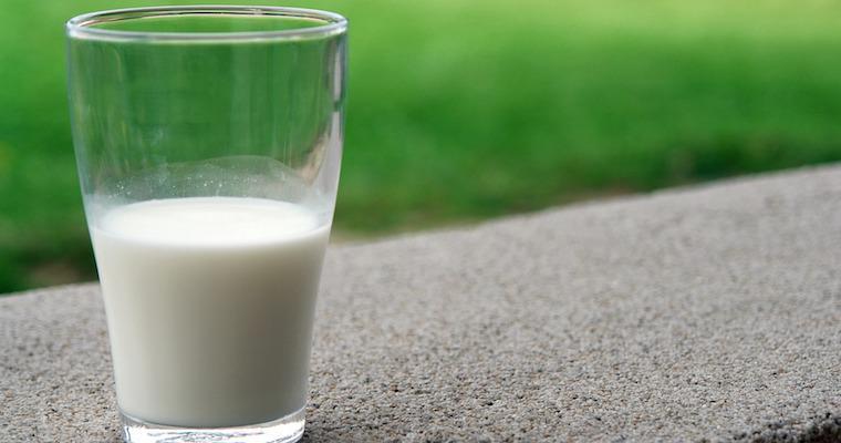 犬にヤギミルクは与えて大丈夫! その栄養成分や効能などを解説