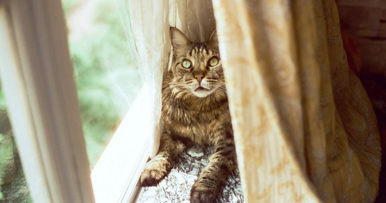 猫が食べてはいけないもの一覧 特に危険な食べ物・植物を解説