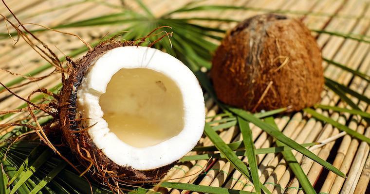 犬はココナッツを食べても大丈夫? ココナッツの栄養素や与える際の注意点も紹介