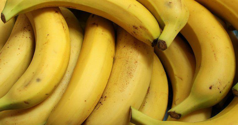 犬はバナナを食べても大丈夫! 量や与え方の注意点やレシピなどを紹介
