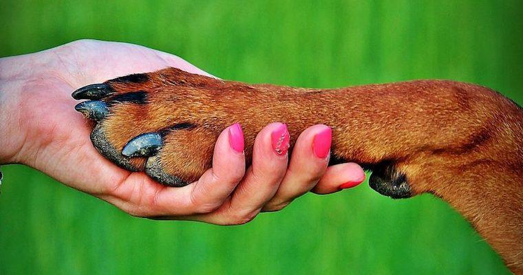犬の狼爪とは? ケアの仕方や手術について解説