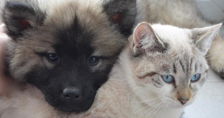 新型コロナウイルスは犬や猫にも感染する? 獣医伝染病の専門家が緊急セミナーを開催