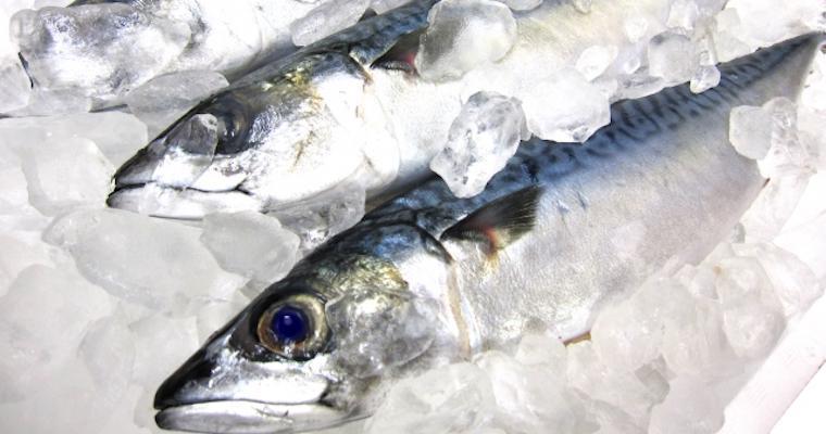 犬はサバ(鯖)を食べても大丈夫? 水煮缶の塩分や魚の骨に注意