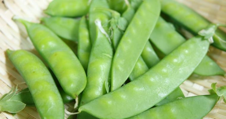 犬はえんどう豆を食べても大丈夫? 栄養豊富もアレルギーや生食に注意