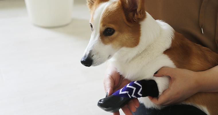 【Buyer's Review】LIFELIKEの犬用靴下「dog socks」