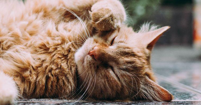 猫はポカリを飲んでも大丈夫? 脱水症状対策に有効も量や与え方に注意して