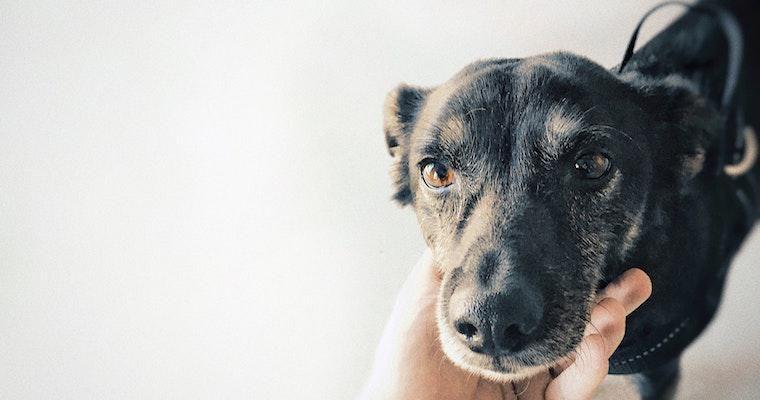 犬の下痢の原因とは? 対処法や病院に連れて行くべきかなどを獣医師が解説
