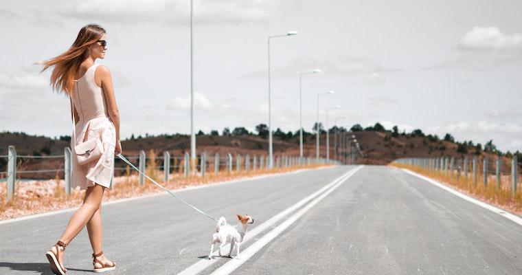 犬が散歩を怖がるときの理由や対処法を行動診療科獣医師が解説