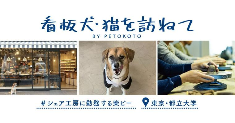 【看板犬・猫を訪ねて Vol.1】シェア工房に勤務する柴ビー